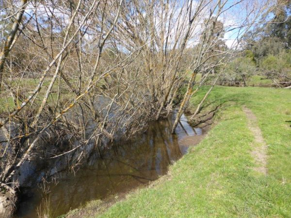 Rubicon River, Thornton, showing the river widening out behind the willows. Photo courtesy Goulburn Broken CMA