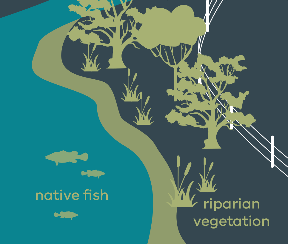 Stylised image of native fish in a stream with riparian vegetation on fenced bank
