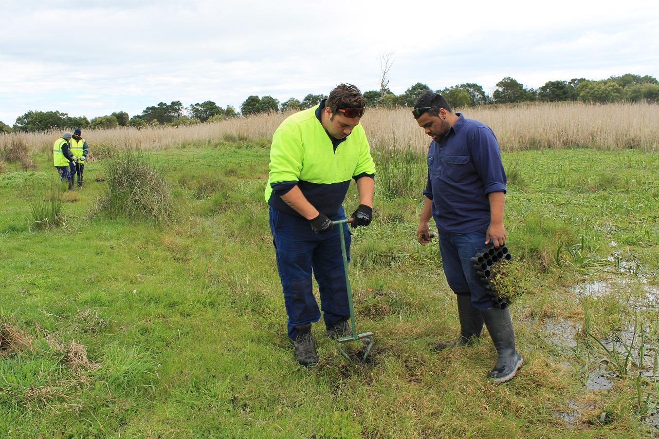 Indigenous rangers in high-vis vests planting trees