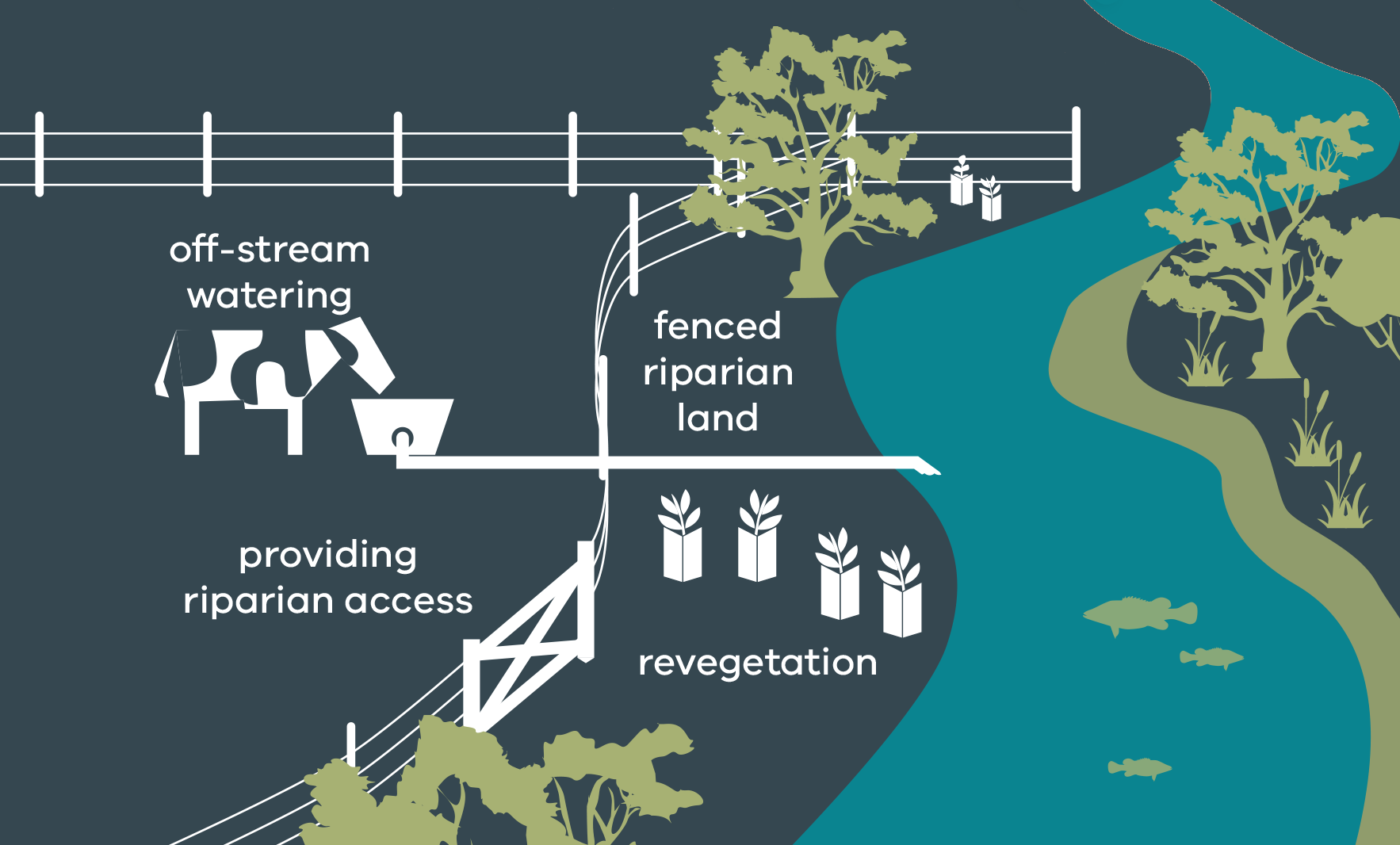 Stylised image showing well-managed riparian land, including off-stream watering of livestock, fenced riparian land with gate access to water and revegetation