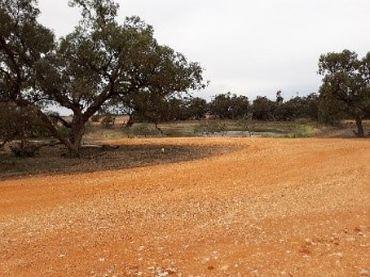 A dirt road at Cokum Reserve after restoration
