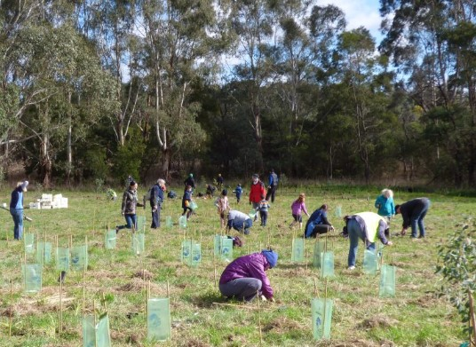 Students and teachers plant trees in a field