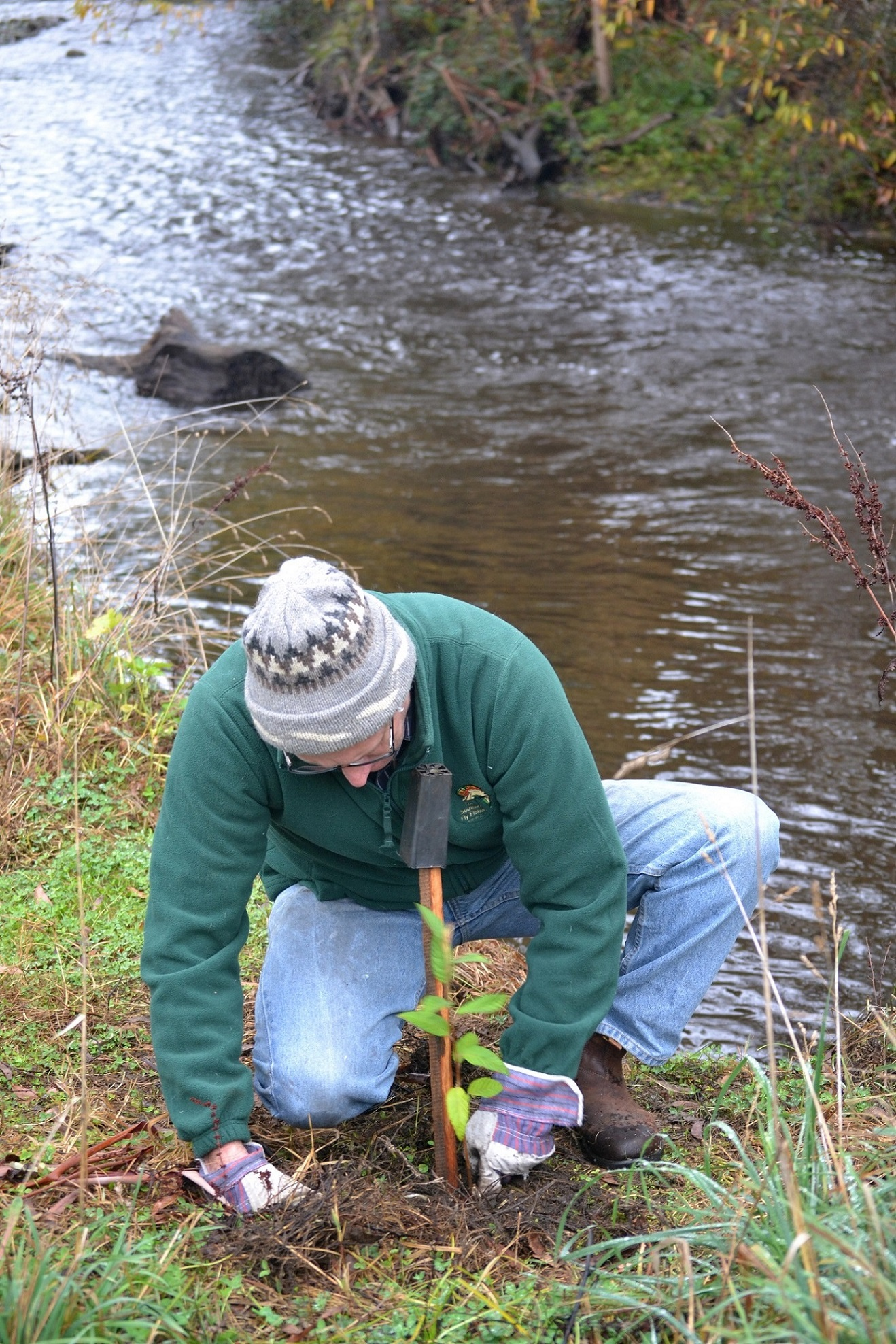 Photo of volunteer planting sapling as part of the Steavenson River Tree and Angler Partnerships program.