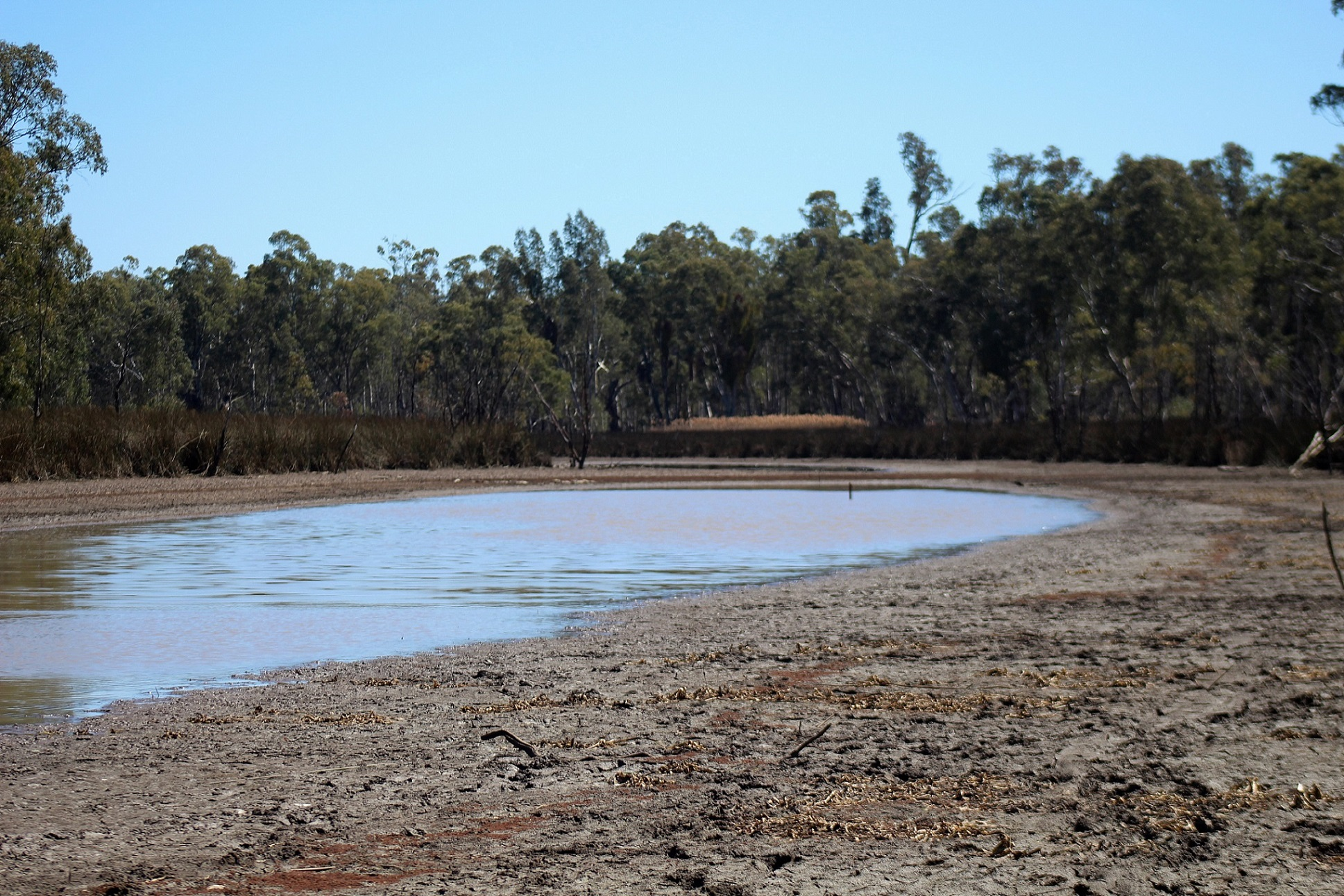 Photo of Gunbower Forest before environmental watering showing as a dry bed with a puddle of water